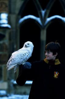 Kadras i� filmo �Haris Poteris ir I�minties akmuo�